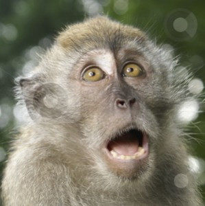 cutcaster-photo-100060658-Long-tailed-macaque-monkey-frightened